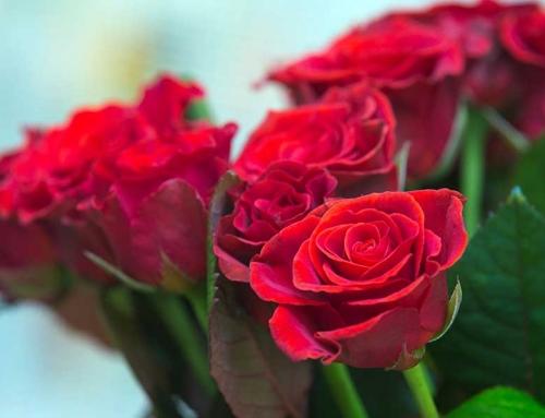 ¿Cuál es el significado de la cantidad de rosas en un ramo?