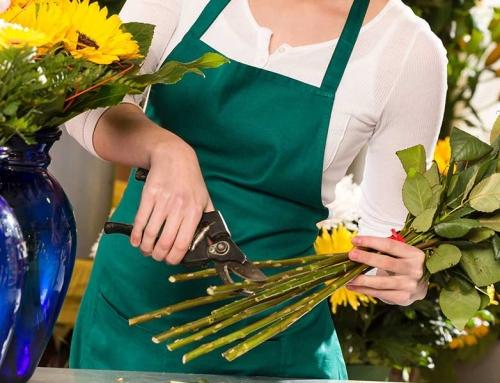¿Como cuidar las flores?