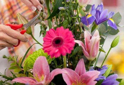 Cuidados flor ramo