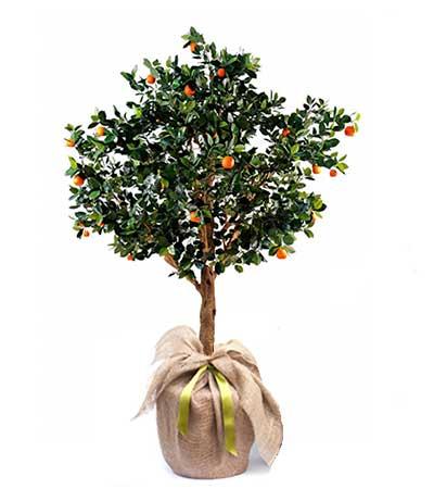 Naranjo planta