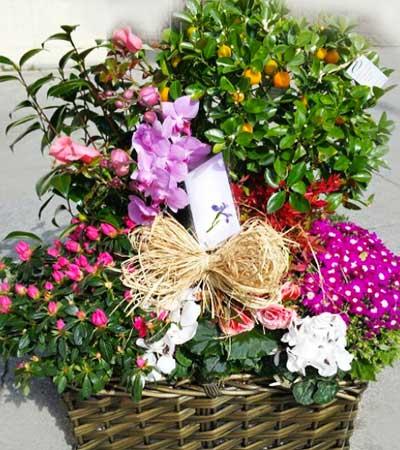 Centros De Flores Naturales Flores Frescas Flores Pili