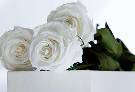 Significado de las rosas por su color - Significado rosas amarillas ...