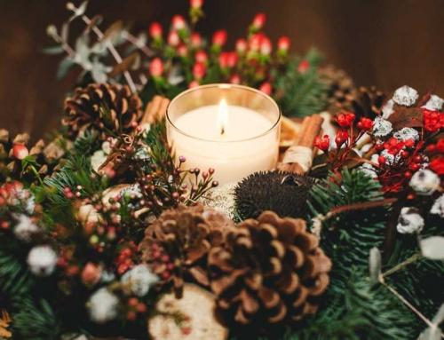Navidad Flores y Plantas