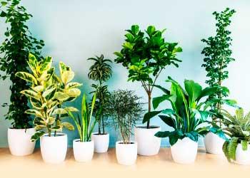 Comprar flores y plantas decorativas para empresas en for Plantas decorativas ornamentales